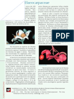PFRD_1999_Elaeocarpaceae