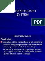 respiratory system ppt copy