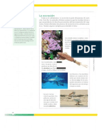 Novedades 2013 - Conocer Más Ciencias Naturales 5 Nación5