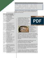 Aromaterapia De La A A La Z Patricia Davis Pdf