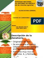 cultivo de zanahoria