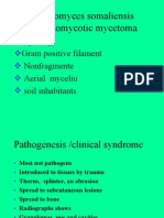 Streptomyces Somaliensis ((Actinomycotic Mycetoma)