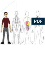 Human Body Systems-colourdoit
