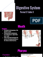 digestive system powerpoint