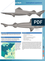 Leafscale Gulper Shark St Factsheet