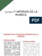 Venas y Arterias de La Muñeca