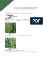 plantswriting