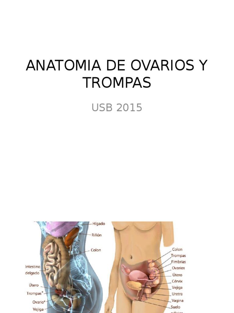 Anatomía sist. reproductor femenino.