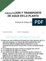 Absorción y Transporte de Agua