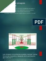 Formación de Sinapsis Inmunológica