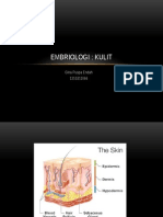 1 embrio kulit
