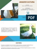 Patos Generalidades
