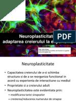 Seminar 2 Neuroplasticitate