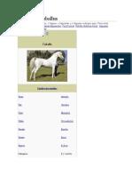Equus Ferus Caballustrrt