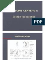 Anatomie cerveau 1