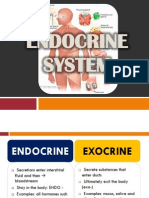 Endocrine System (2)