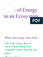 flow of energy in an ecosystem pp