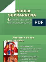 5.-SUPRARRENAL