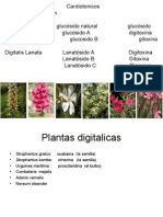 5 digitalicos.ppt