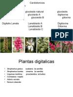 5 digitalicos.ppt