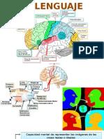 Lenguaje e imaginacion, fisiologia de ambos procesos mentales.