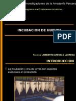 Incubacion y Cria de Larvas Lamberto