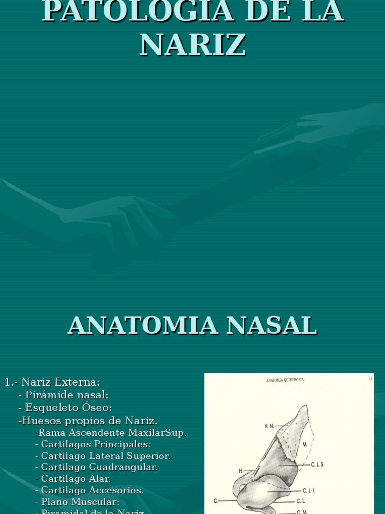Único Anatomía Quirúrgica De La Nariz Composición - Imágenes de ...