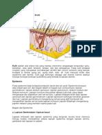 Anatomi Dan Fisiologi Kuli2