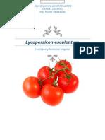 Lycopersicon Esculentum Plan de Fertilidad Nelson Aguirre