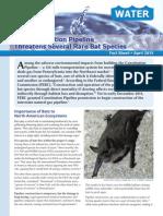 The Constitution Pipeline Threatens Several Rare Bat Species April 2015