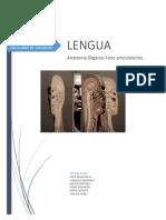 Informe Anatomía LENGUA