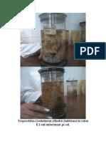 Parazitologie examen