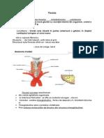 Tiroida C