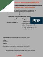 FV_Estres_oxidativo