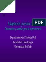 CLASEadaptacioncelular (1)