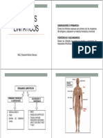 Organos Linfaticos (3)