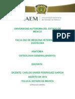 Osteologia General Anatomia Uaem