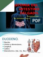 anatomiadeintestinodelgado-111003131438-phpapp01.pptx