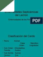 Enfermedades Septicémicas Del Lechón