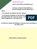 2ciclo Celular y Biol Mol-2015