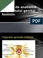 Notiuni de Anatomie a Aparatului Genital Feminin