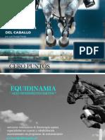 Aportes y carencias en la alimentación del caballo