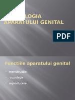MORFOLOGIA APARATULUI GENITAL.pptx