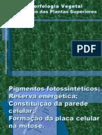 BOTÂNICA  EM  PAWER POINT