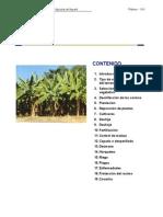 Manual Tecnico  produccion de platano Nayarit