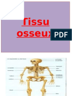 05 Tissu osseux