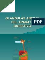Glandulas Anexas Del Aparato Digestivo IV