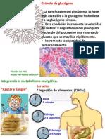 17regulación Hormonal de Glucemia100414-4