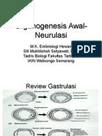 organogenesis-awal-neurulasi