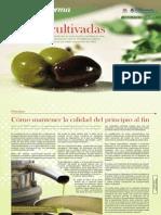 OLIVO Informe Inta 2015